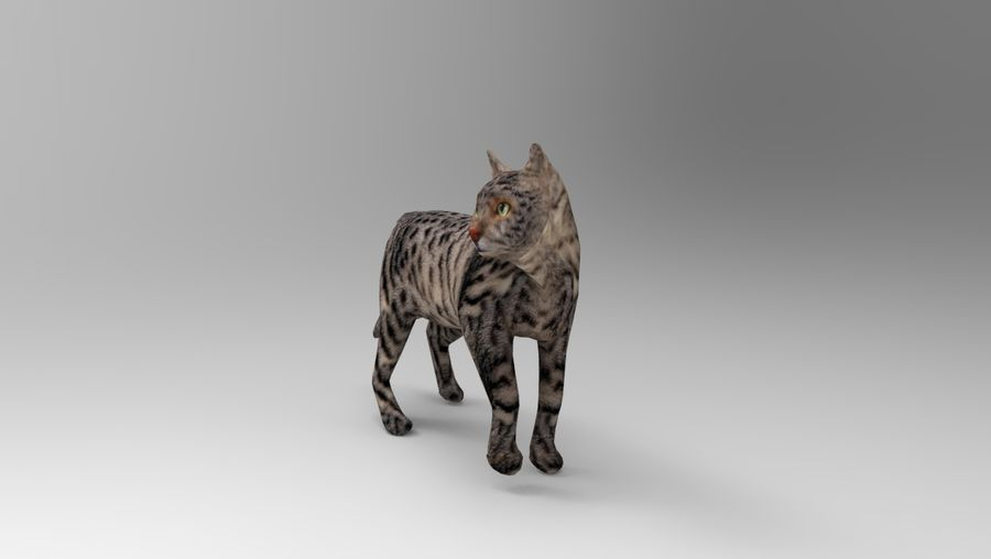 kot takielunek royalty-free 3d model - Preview no. 2