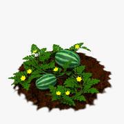 Wassermelonenpflanze 3d model