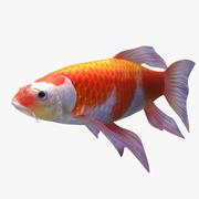 pesce rosso koi 3d model