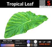 열대 잎 3d model