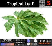 Tropisch Blad 3d model