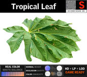Tropikal Yaprak 3d model