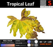 Tropikal Yaprak (1) 3d model