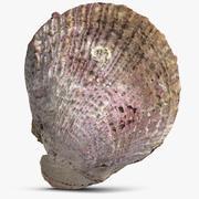 Sea Shell 23 3d model