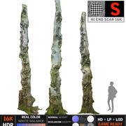 Floresta velha 16K 3d model