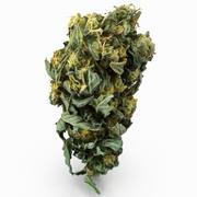 Cannabis Bud 04 3d model