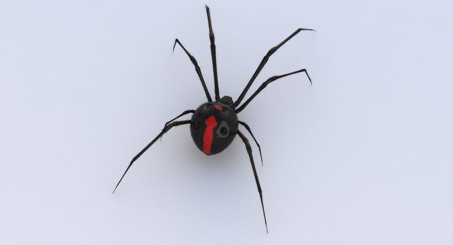Black Widow royalty-free 3d model - Preview no. 10