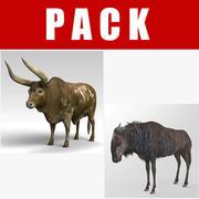 Ankole Wildebeest 3d model