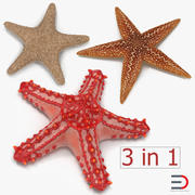 Starfishes Collection 2 3d model