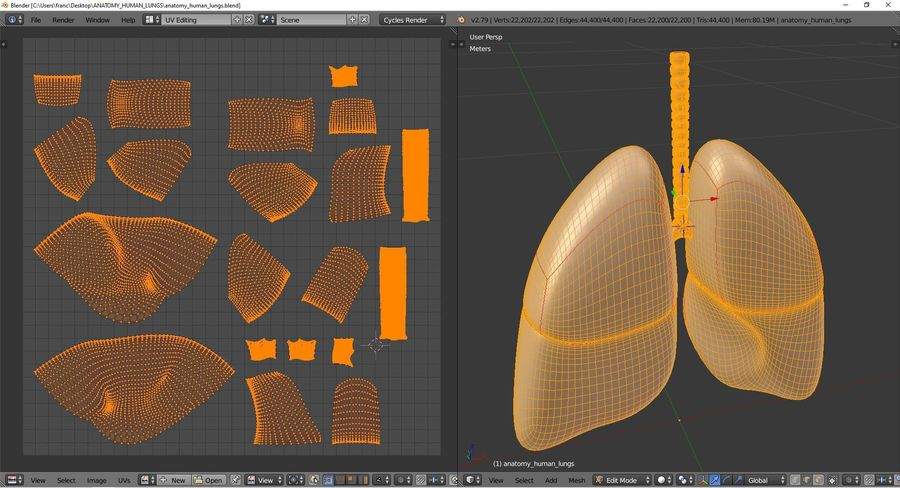 Anatomy - Human lungs royalty-free 3d model - Preview no. 10