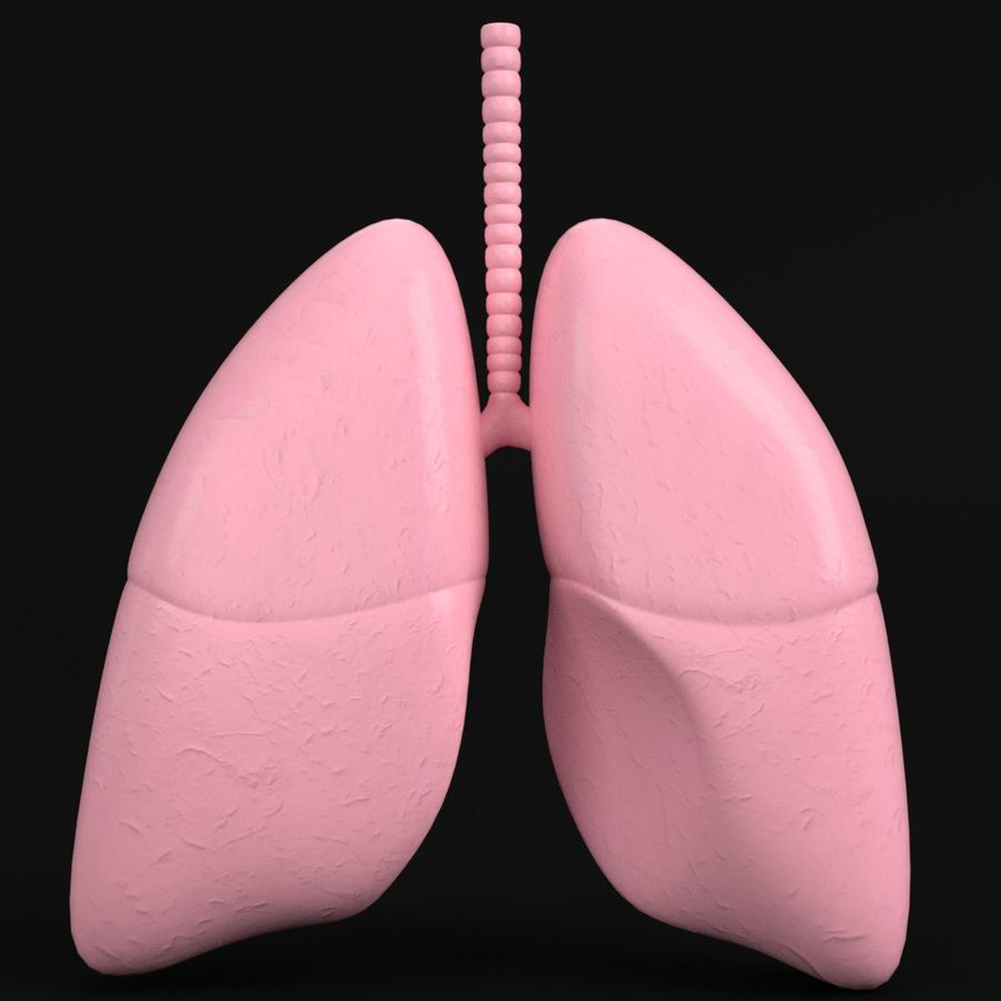 Anatomy - Human lungs royalty-free 3d model - Preview no. 1