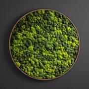 círculo de musgo do painel 3d model