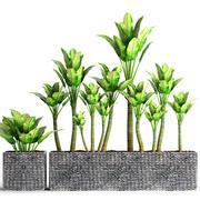 Plants collection pot 3d model