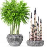 Drzewa bambusowe 3d model