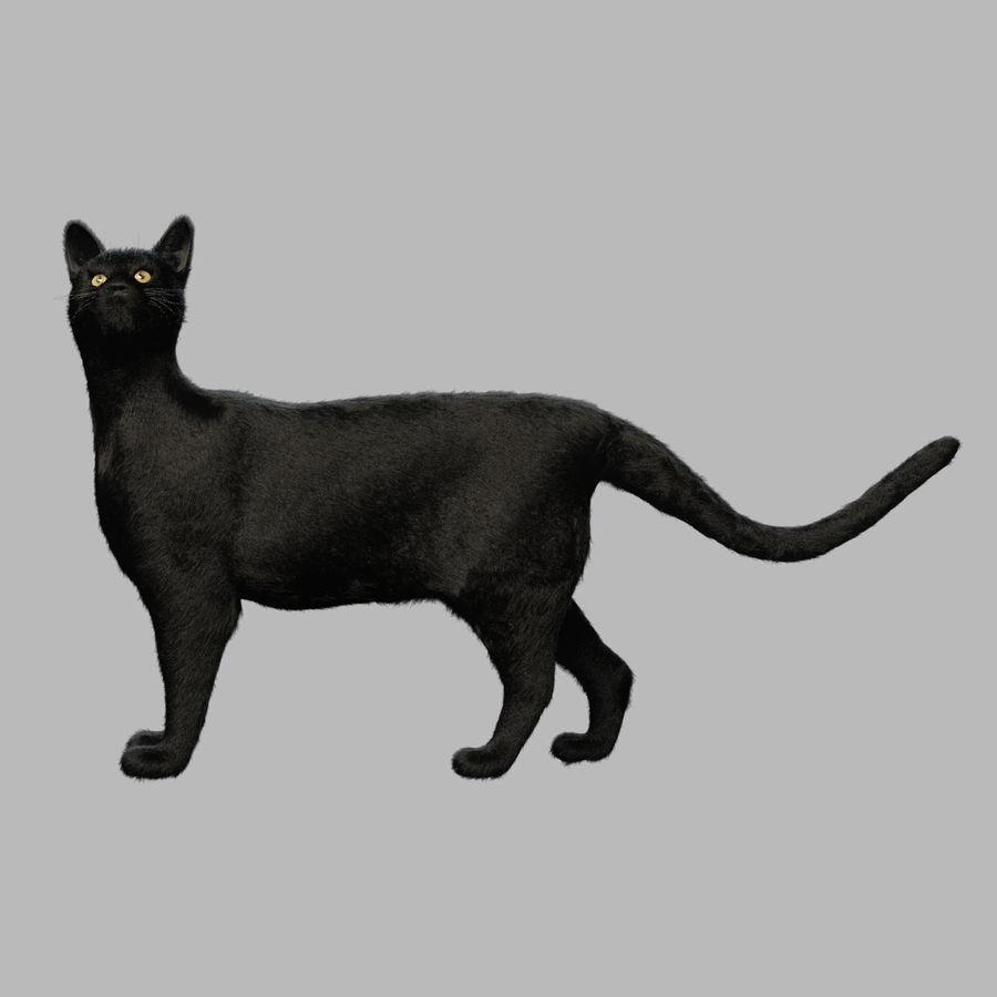 Gato preto royalty-free 3d model - Preview no. 2