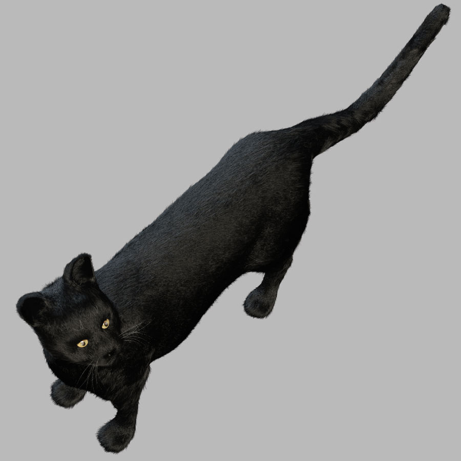 Gato preto royalty-free 3d model - Preview no. 7