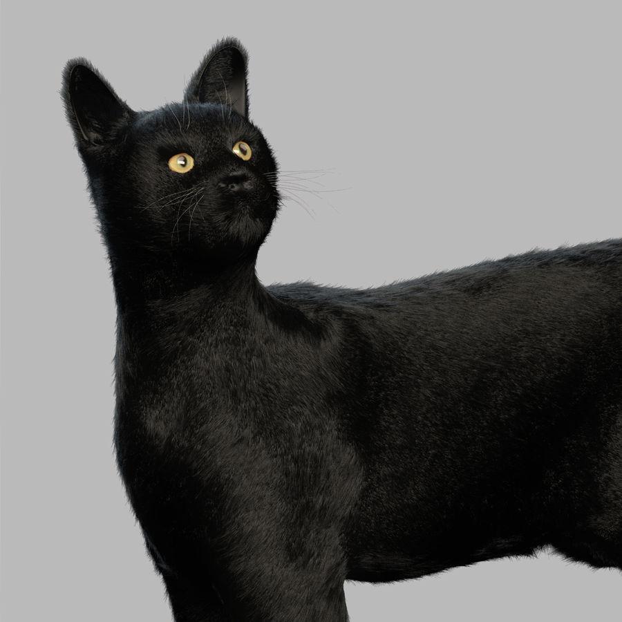 Gato preto royalty-free 3d model - Preview no. 6