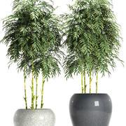 bamboe plant 96 3d model