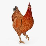 Brown Chicken opgetuigd 3d model