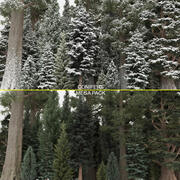 40+40 Conifer Trees 3d model