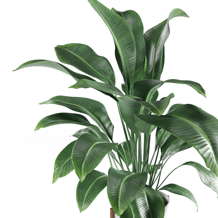 Plant royalty-free 3d model - Preview no. 4