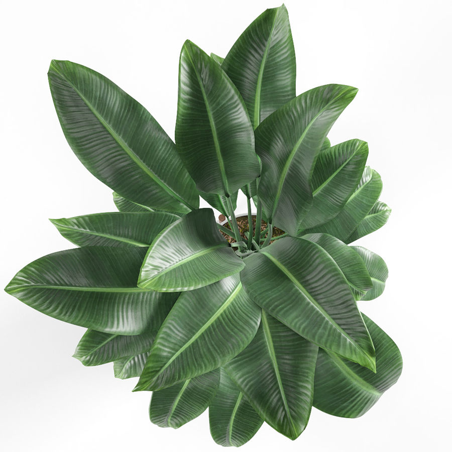 Plant royalty-free 3d model - Preview no. 5