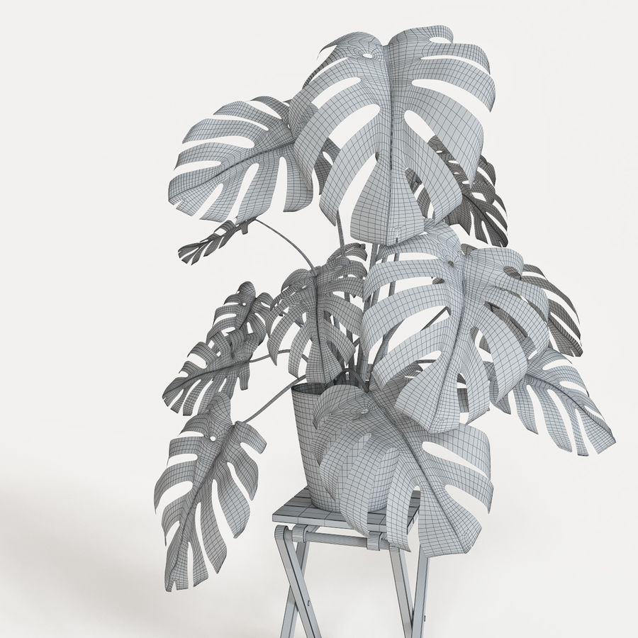 Monstera royalty-free 3d model - Preview no. 6