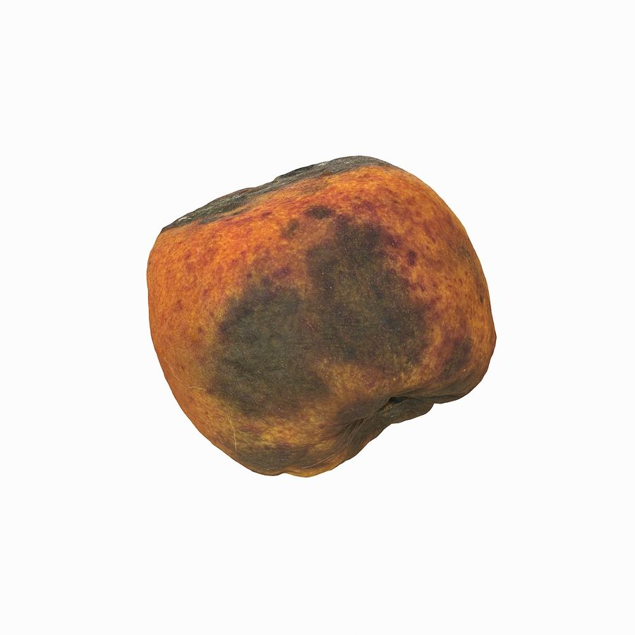 Rotten Rotte Apricot 03 royalty-free 3d model - Preview no. 24
