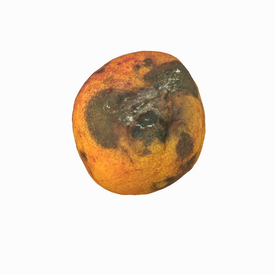 Rotten Rotte Apricot 03 royalty-free 3d model - Preview no. 12