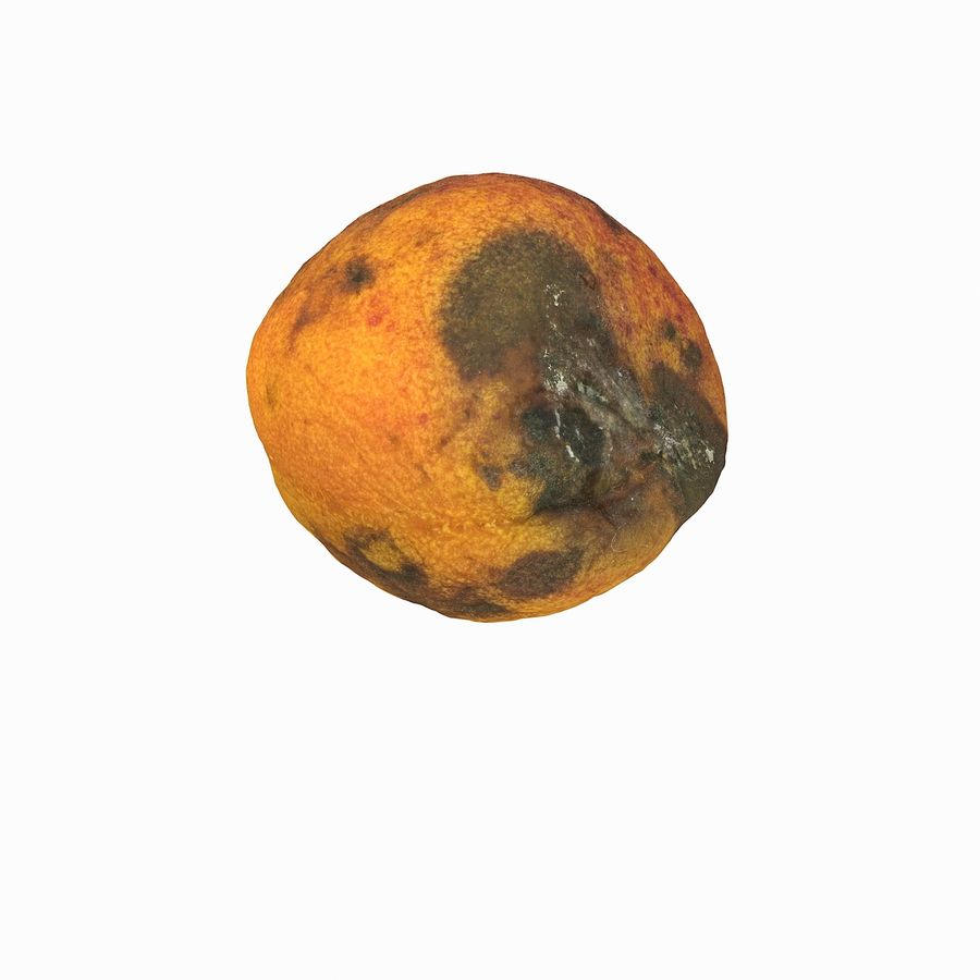 Rotten Rotte Apricot 03 royalty-free 3d model - Preview no. 3
