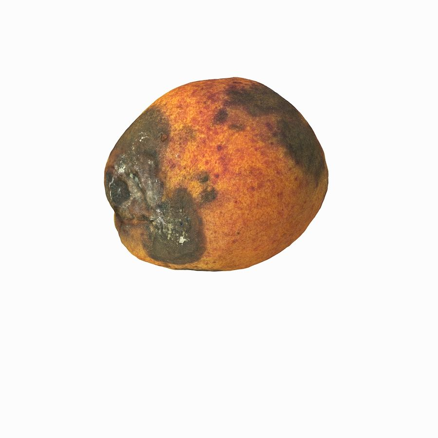 Rotten Rotte Apricot 03 royalty-free 3d model - Preview no. 21