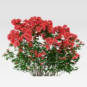 Azalea buske (Rhododendron) 3d model