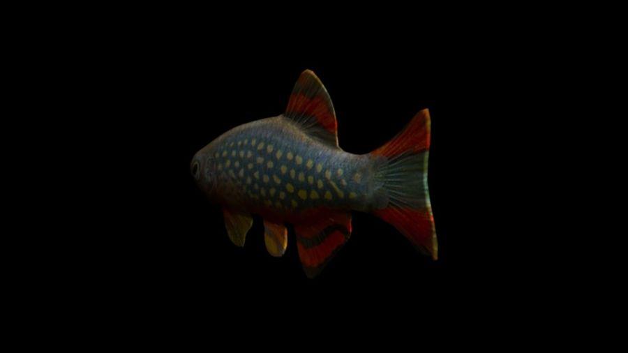 peces de acuario 3 royalty-free modelo 3d - Preview no. 5