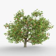 albero di mele 3d model