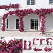 Bougainvillea Collection (+GrowFX) 3d model