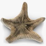 Starfish 3 3d model