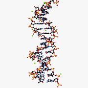 DNA Double-Helix 3d model