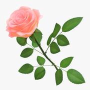 Rose 04 3d model