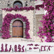 Bougainvillea Collection 2 (+ GrowFX) 3d model