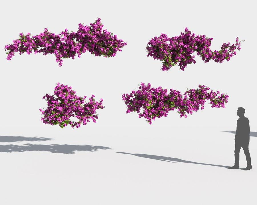 Collezione Bougainvillea 2 royalty-free 3d model - Preview no. 8