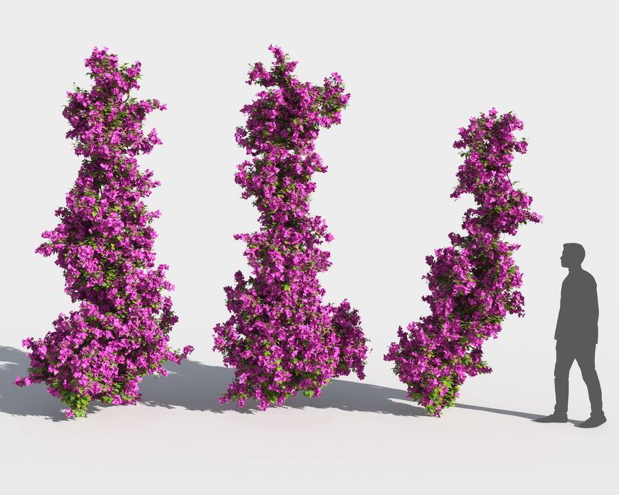 Collezione Bougainvillea 2 royalty-free 3d model - Preview no. 3