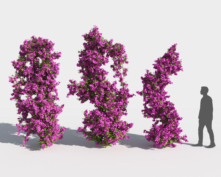 Collezione Bougainvillea 2 royalty-free 3d model - Preview no. 4