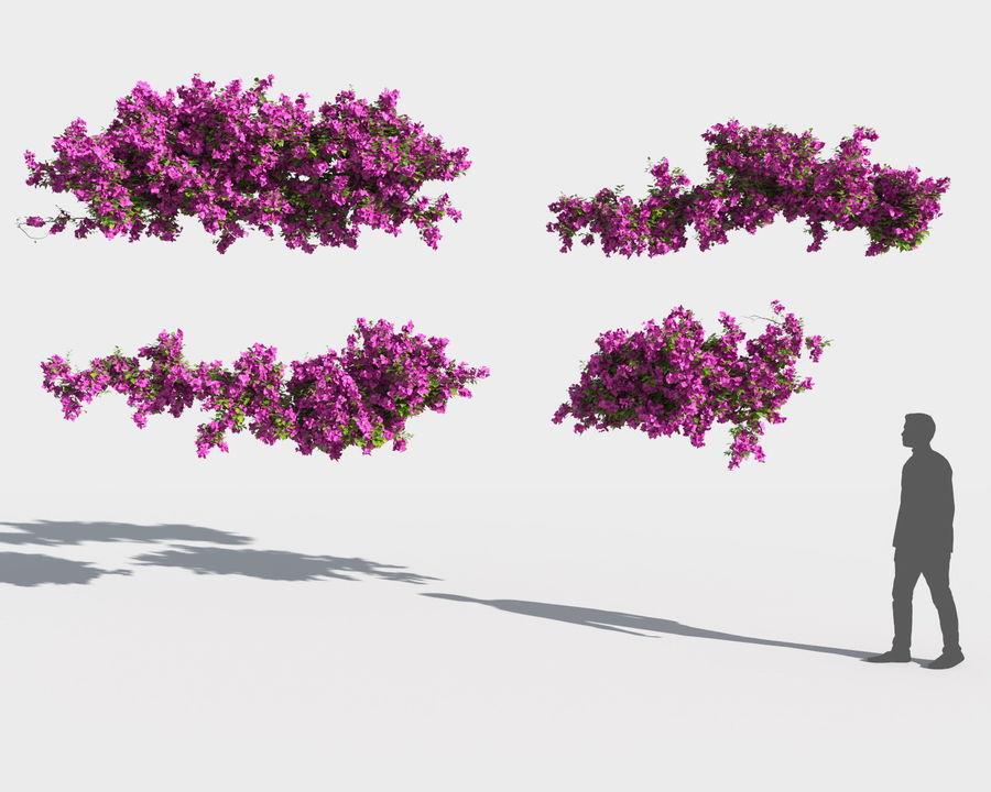 Collezione Bougainvillea 2 royalty-free 3d model - Preview no. 9