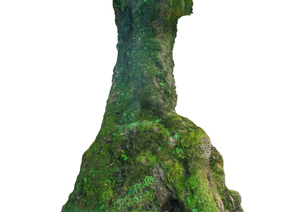 Albero della foresta di alloro 16K royalty-free 3d model - Preview no. 10
