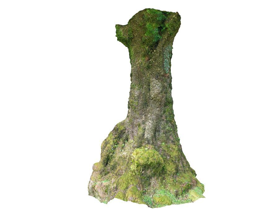 Albero della foresta di alloro 16K royalty-free 3d model - Preview no. 8