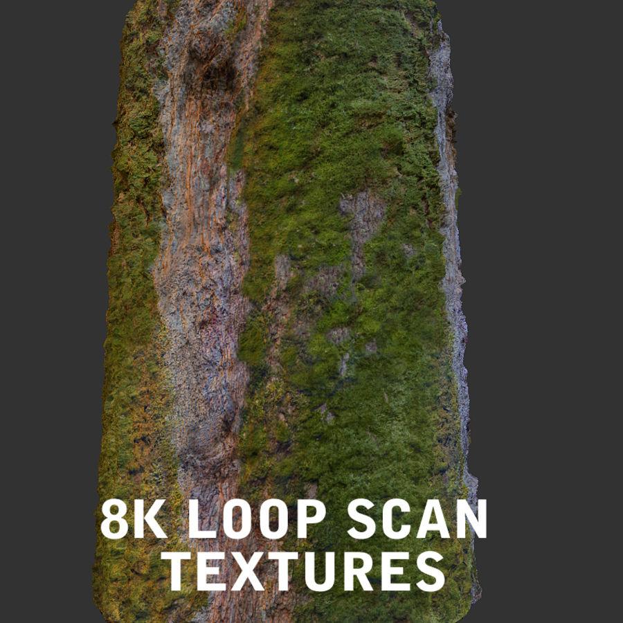 Albero della foresta di alloro 16K royalty-free 3d model - Preview no. 13