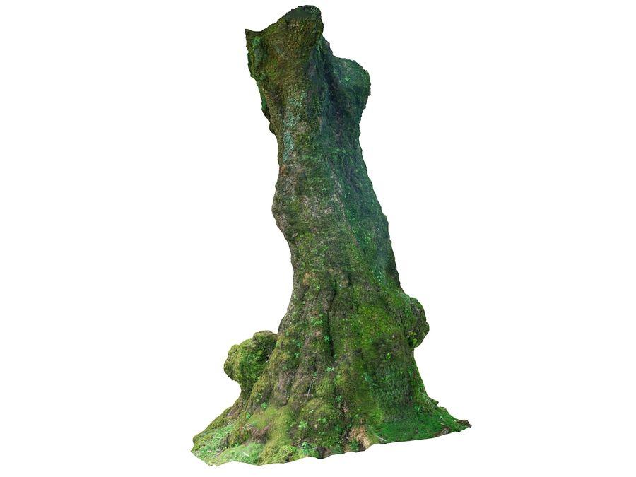 Albero della foresta di alloro 16K royalty-free 3d model - Preview no. 4