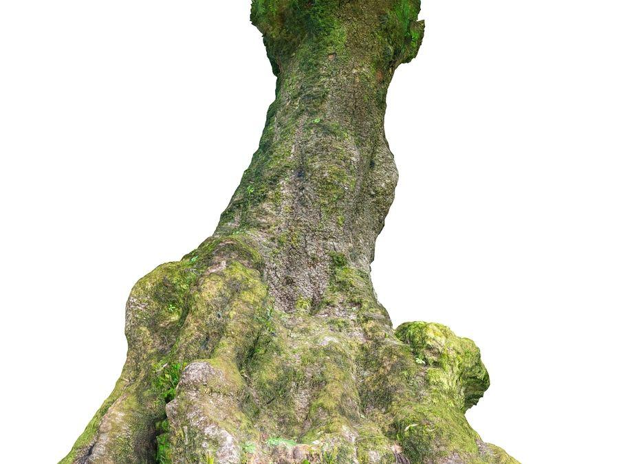 Albero della foresta di alloro 16K royalty-free 3d model - Preview no. 11
