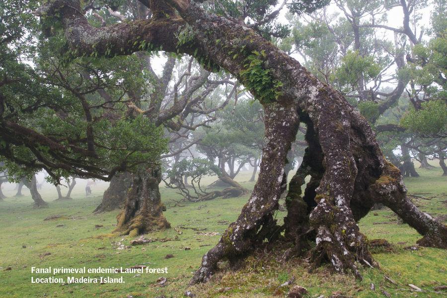 Albero della foresta di alloro 16K royalty-free 3d model - Preview no. 14