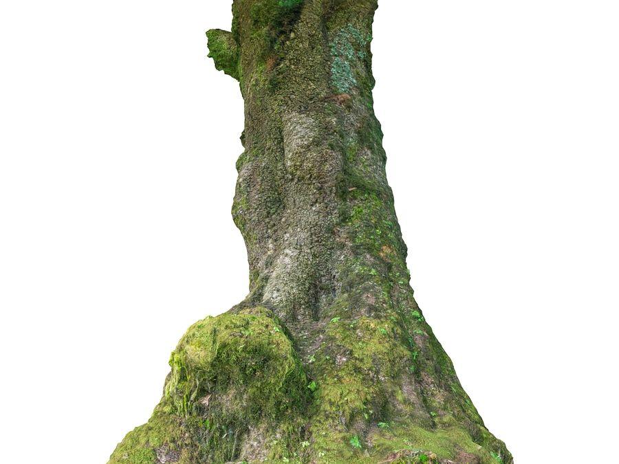 Albero della foresta di alloro 16K royalty-free 3d model - Preview no. 7